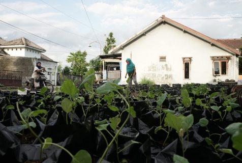 Usulan Program (Prioritas) Bagi Desa Wisata – Hasil Survei Cepat Bagian II